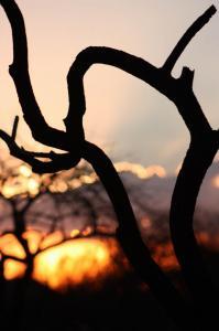 Sondela Sunset (Oct 2013)
